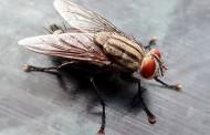 Πασχαλινό τραπέζι και μύγες: Τρόποι για να τις εξοντώσετε!
