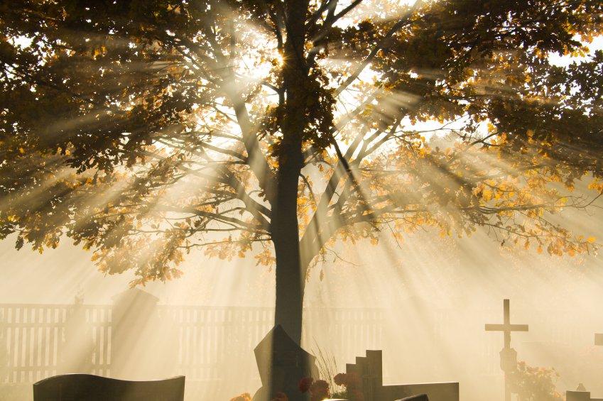 Baum-Bestattung