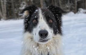 Ξεκαρδιστικό βίντεο: Σκύλος μαθαίνει τα ευχάριστα!