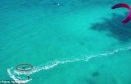 Τρομακτικό βίντεο: Κάνει kitesurfing δίπλα σε έναν μεγάλο λευκό καρχαρία!