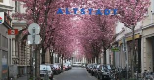 Εσείς έχετε επισκεφθεί τις Υπέροχες κερασιές της Βόννης;