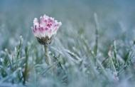 Γερμανία: Τη Δευτέρα ηλιοφάνεια και την Τετάρτη … χιόνια και τσουχτερό κρύο!