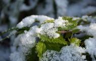 Γερμανία: Φρέσκο χιόνι μέχρι 50 εκατοστά! Που θα πέσει η θερμοκρασία κάτω από το 0