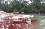 Βίντεο: Μυστηριώδες πλάσμα 15 μέτρων ξεβράστηκε σε παραλία της Ινδονησίας