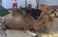 Μητέρα ξόδεψε 25.000 δολάρια για το πάρτι του γιου της: Μέχρι και καμήλα έφερε!
