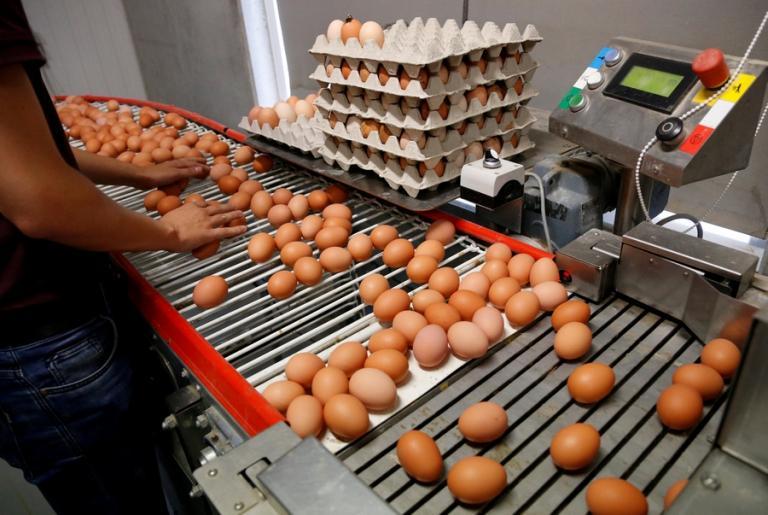 Σκάνδαλο με μολυσμένα αυγά: Εντόπισαν παρτίδα 20.000 και στην Ισπανία
