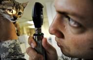 Βερολίνο: Κτηνίατρος «μαϊμού» εξαπατούσε για χρόνια τους πελάτες του