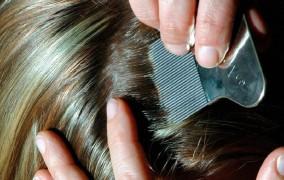 Γερμανία: Πρόστιμο μέχρι και 25.000 ευρώ εάν αποκρύψετε την ύπαρξη … ψειρών