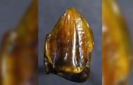 Δόντια 9,7 εκατ. ετών γράφουν ξανά την ιστορία της ανθρωπότητας