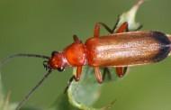 Γιατί ψοφούν τα έντομα στη Γερμανία;