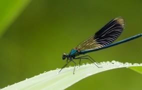 Γιατί πεθαίνουν τα έντομα στη Γερμανία