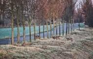 Γερμανία: Τι πρέπει να προσέχουν οι οδηγοί κατά τους φθινοπωρινούς μήνες