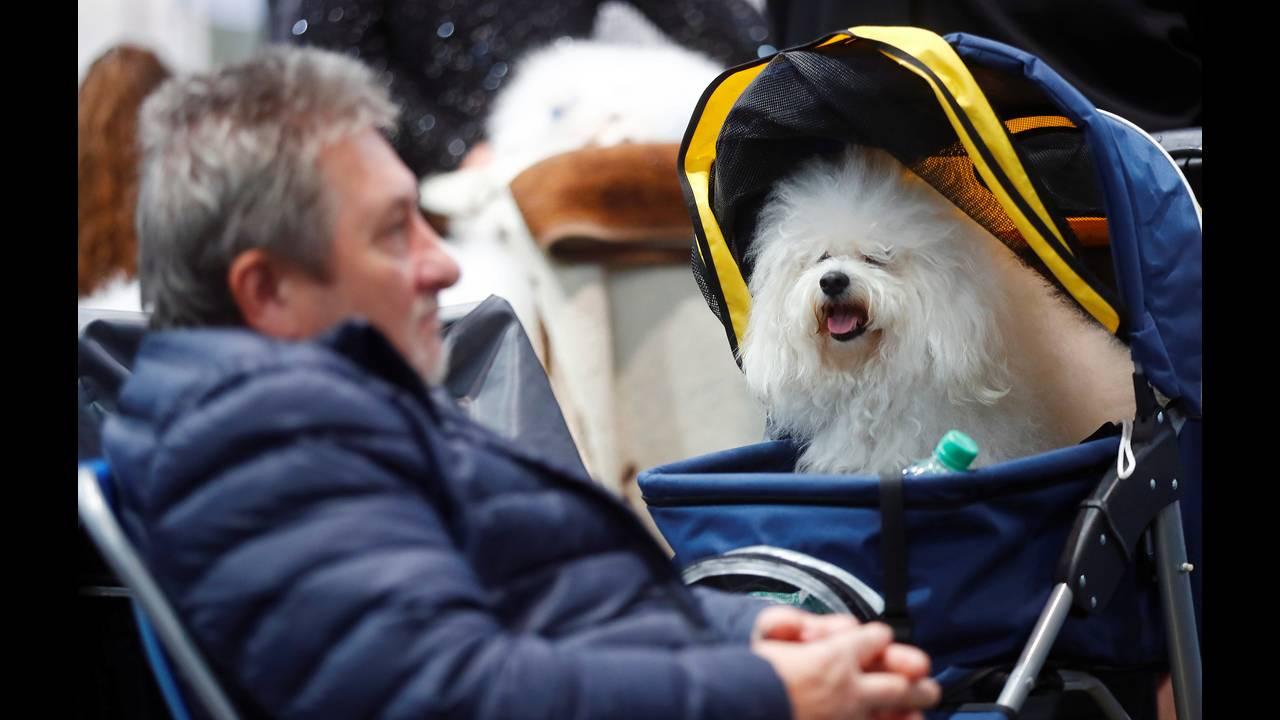 Γερμανία: Πάνω από 31.000 διαγωνιζόμενοι στο World Dog Show