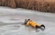 Η δραματική διάσωση ενός σκύλου που έπεσε σε παγωμένη λίμνη (vid)