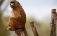 Πανικός στο Παρίσι: Εκκενώθηκε ο Ζωολογικός Κήπος μετά την απόδραση 50 μπαμπουίνων