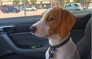 Πολύ γέλιο: Η στιγμή που ο σκύλος καταλαβαίνει πως τον πας στον κτηνίατρο και όχι βόλτα