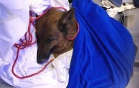 Σκυλίτσα χάθηκε στη Γερμανία και βρέθηκε... στην Ελβετία!