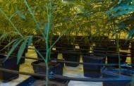 «Κόλαφος» από γερμανικό περιοδικό για Τσίπρα - Τσακαλώτο: Ποντάρουν στην ανάπτυξη με... ναρκωτικά!