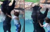 Βίντεο: Αρκούδα χοροπηδά ρυθμικά με ένα αγοράκι και προσφέρει ένα μοναδικό θέαμα