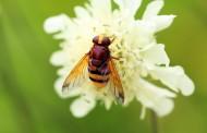 Γερμανία: Πρόστιμο από 5.000 έως 65.000 ευρώ αν σκοτώσετε σφήκα!