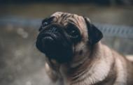 Γερμανία: Σάλος με δημοτική αρχή που πούλησε σκυλάκι στο Ebay