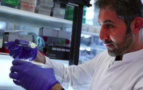 Γερμανία: Ομάδα επιστημόνων δημιούργησαν διαφανή όργανα πειραματόζων και ανθρώπων!