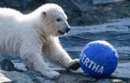 Hertha:Η πολική αρκούδα που υιοθέτησε η ποδοσφαιρική ομάδα του Βερολίνου
