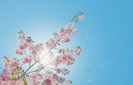 Γερμανία: 5 σημάδια που δείχνουν ότι η άνοιξη ήρθε για τα καλά
