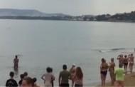 Βίντεο: Δελφίνι εγκλωβίστηκε σε παραλία των Χανίων