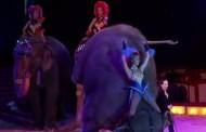 Γερμανία: Ελέφαντας έπεσε σε θεατές - Οργή για το βίντεο από τσίρκο